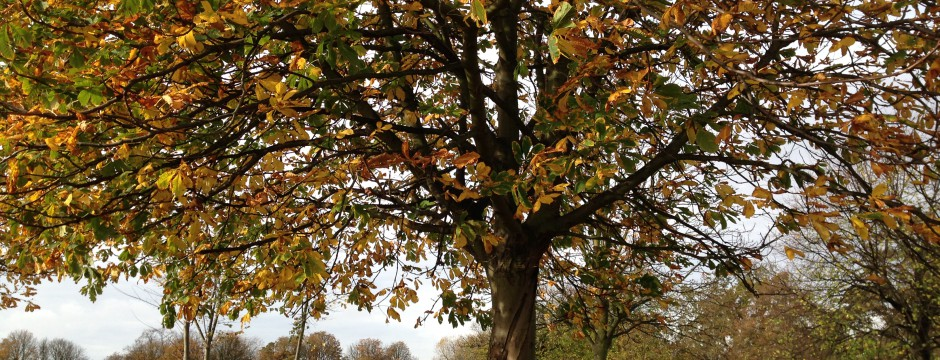 Clapham Common woodland areas
